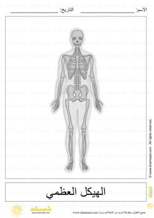 أجهزة جسم الإنسان علوم الصف الرابع الابتدائي ترم ثاني منهج مصري نفهم Youtube